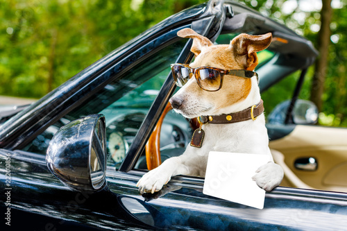 Deurstickers Crazy dog dog drivers license driving a car