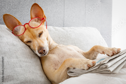 Aluminium Prints Crazy dog dog in bed with newspaper