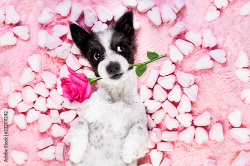 Poster Crazy dog dog love rose valentines