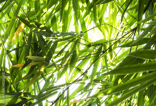 In de dag Bamboo Bamboo leaves in the forest.