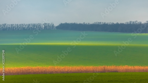 Spoed Foto op Canvas Bleke violet Emerald fields. Spring fog. Winter culture. Agricultural landscape.