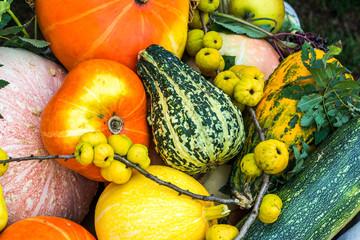 Kompozycje warzywno owocowe jako tła z płodów rolnych