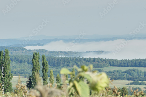 Fotografie, Obraz  Nebel und Dürre