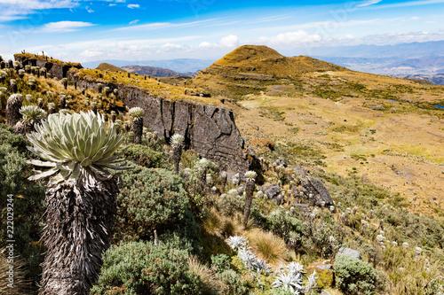 Keuken foto achterwand Zuid-Amerika land Espeletia Frailejones of the Paramo de Oceta Mongui Boyaca in Colombia South America