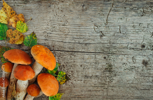 Fototapeta Variety of uncooked wild forest mushrooms yellow boletus, birch mushrooms, russules over dark textured rusty background. Rustic style, natural day light. Top view, food background concept obraz
