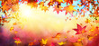 canvas print picture Falling Autumn Red Leaves With Sunlight - Fall Background