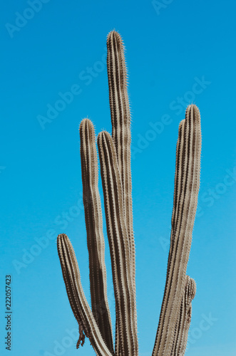 Foto op Canvas Cactus natural poster. cactus and sky