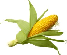 Raw Corn Cob Isolated On White...