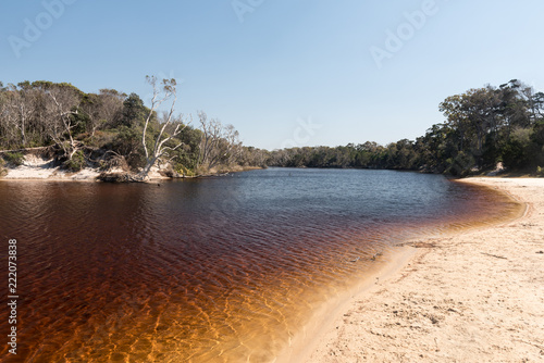 The tannin-stained water of the lagoon surround by forest. On the eastern shore of Bribie Island, Queensland, Australia.