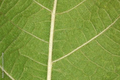 Fotografija  Foglia verde - particolare 2x