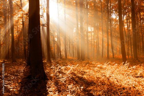 Cadres-photo bureau Foret brouillard Autumn forest landscape