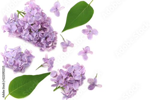 Foto op Canvas Lilac lilac flowers with green leaf isolated on white background. top view