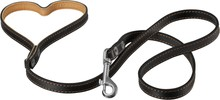 Dog Collar With Leash Isolated