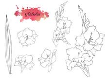 Hand Sketched Set Of Gladiolus...