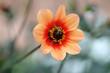 canvas print picture - Blume, Garten, Rose, Sommer