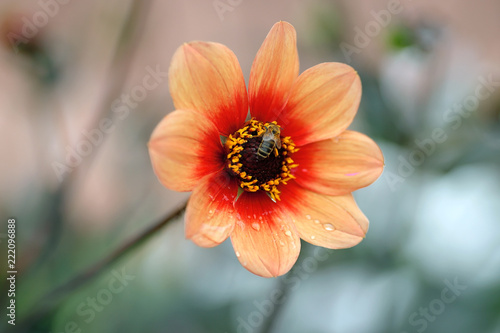 Blume Garten Rose Sommer Buy This Stock Photo And Explore