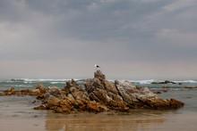 Sea, Rocks And A Seagull