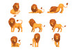 Proud powerful lion character in different actions set of cartoon vector Illustrations on a white background