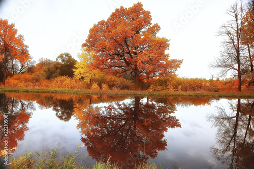 Keuken foto achterwand Rood traf. yellow autumn forest landscape / beautiful trees with yellow leaves in the forest, landscape October autumn, seasonal landscape