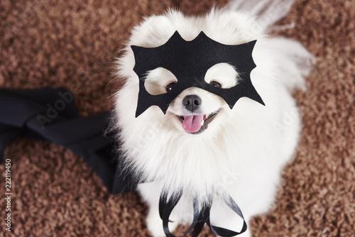 Obraz na płótnie Happy dog in superhero costume