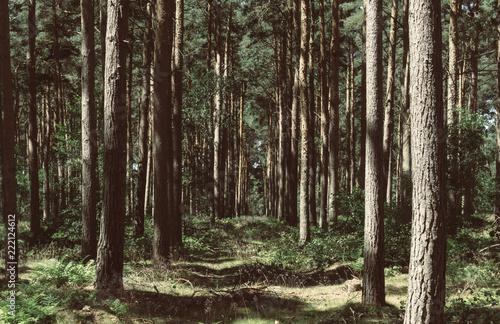 Cadres-photo bureau Foret brouillard Path in the forest
