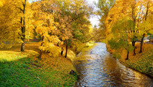 Colorful Forest Scene In The Fall With Yellow Foliage. Autumn City Park Scenery In Vilnius, Lithuania.