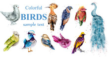 Colorful Tropic Birds Set Vector Watercolor. Beautiful Peacock, Dove, Hoopoe, Mandarin Ducks