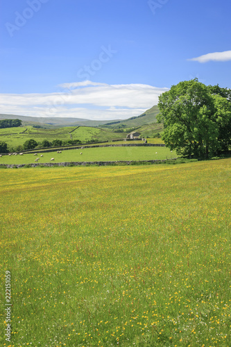 Obraz Wensleydale countryside North Yorkshire England - fototapety do salonu