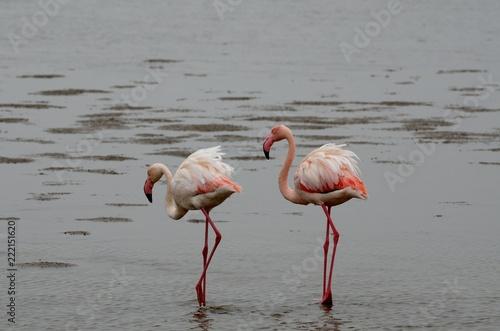 Foto op Aluminium Flamingo Flamingos in Walvis Bay, Namibia
