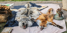Fur Of Killed Wolf And Fox Ani...