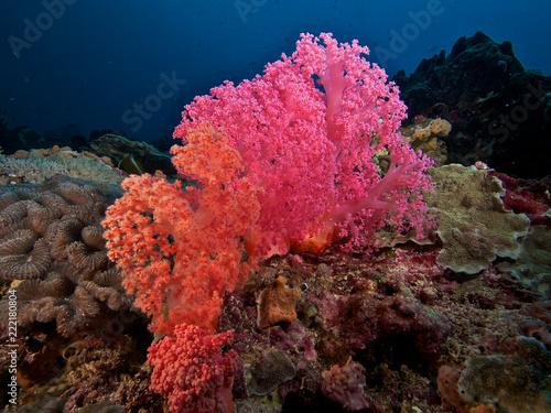 Foto op Aluminium Onder water Dual tone corals