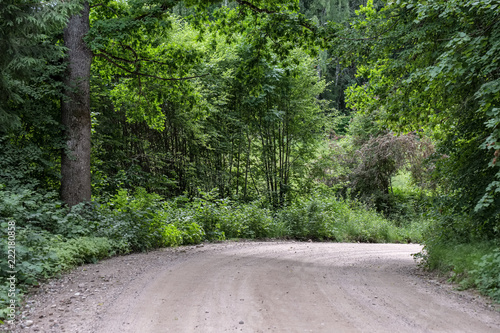 Poster Donkergrijs simple gravel country road in summer in forest