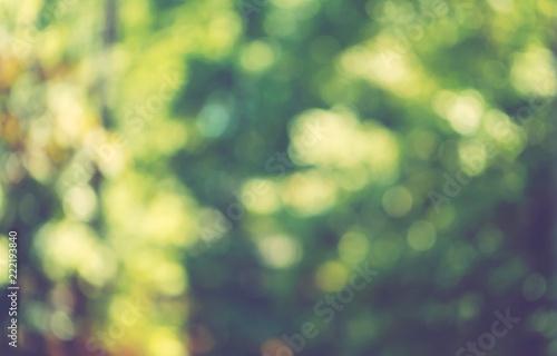 Fotografiet  Abstract blurred bokeh forest background design element