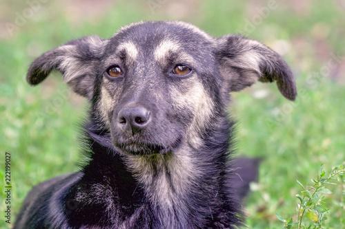 Foto  Portrait of a homeless dog mongrels