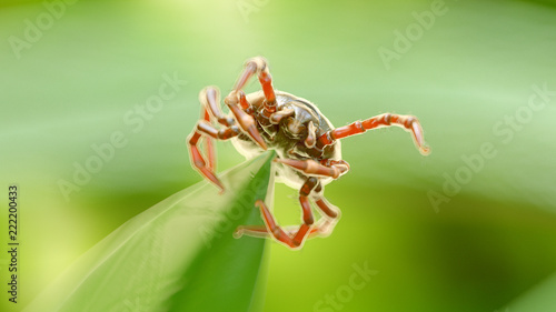 Canvas Print 3d rendered illustration of a tick on a grass blade