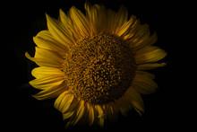 Low Key Sunflower