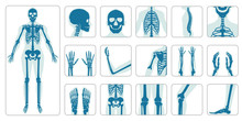 Human Bones Orthopedic And Ske...