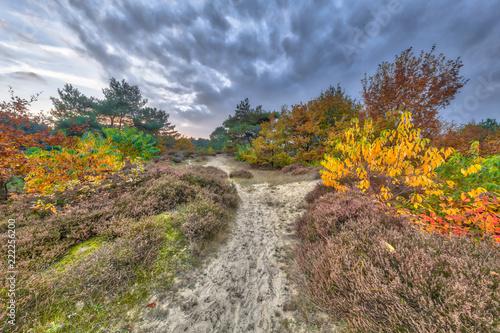 Foto  Autumn heathland landscape