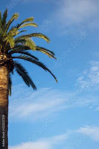 Staande foto Palm boom Palm tree against blue sky with clouds on sunset. Tropical nature background. Palm tree closeup. Exotic landscape. Travel and tourism concept.