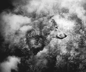 Fototapeta Las Black and White Collage: Wolf Head and the Misty Forest.