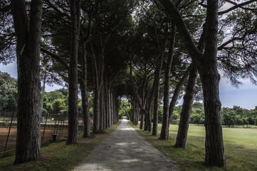 Fototapeta alley in the park