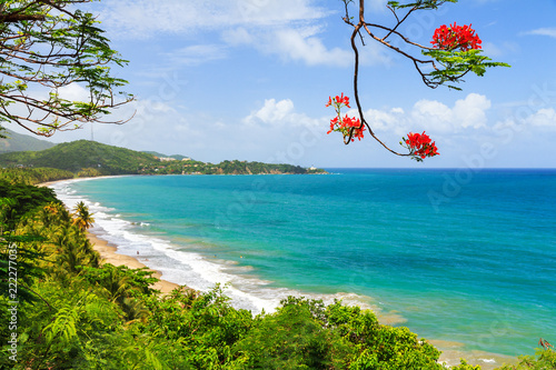 Tuinposter Caraïben Beautiful tropical summer view of Puerto Rico with red flowers and a white beach