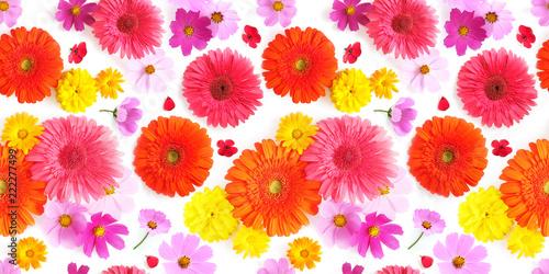 Fototapeta Seamless texture pattern from multi-colored flowers: gerbera, cosmos. top view. obraz na płótnie