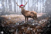 Rentier Mit Nikolausmütze Im Schnee