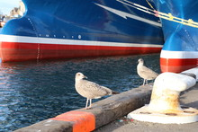 Two Young Seagulls On Pier Wit...
