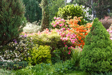 Decorative Trees. Shrubs And F...