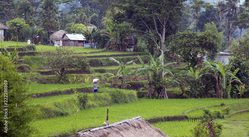 View on rice terraces, Bali, Indonesia