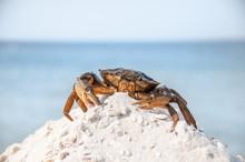 Hairy Leg Mountain Crab On The Beach