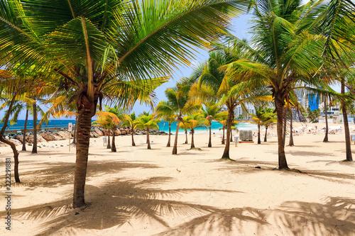 Foto op Plexiglas Caraïben Beautiful tropical palm trees at popular touristic Condado beach in San Juan, Puerto Rico