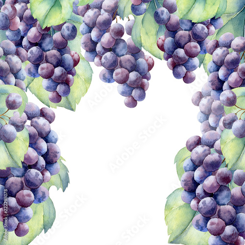 watercolor fruit grapes branch Fototapete